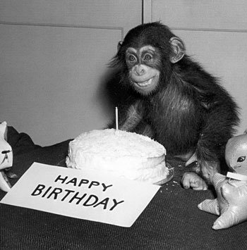 happy-birthday-chimp-note-card-c11765288.jpeg
